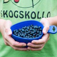 Skogskollo. Kåsa med blåbär, en av skogens alla skatter!
